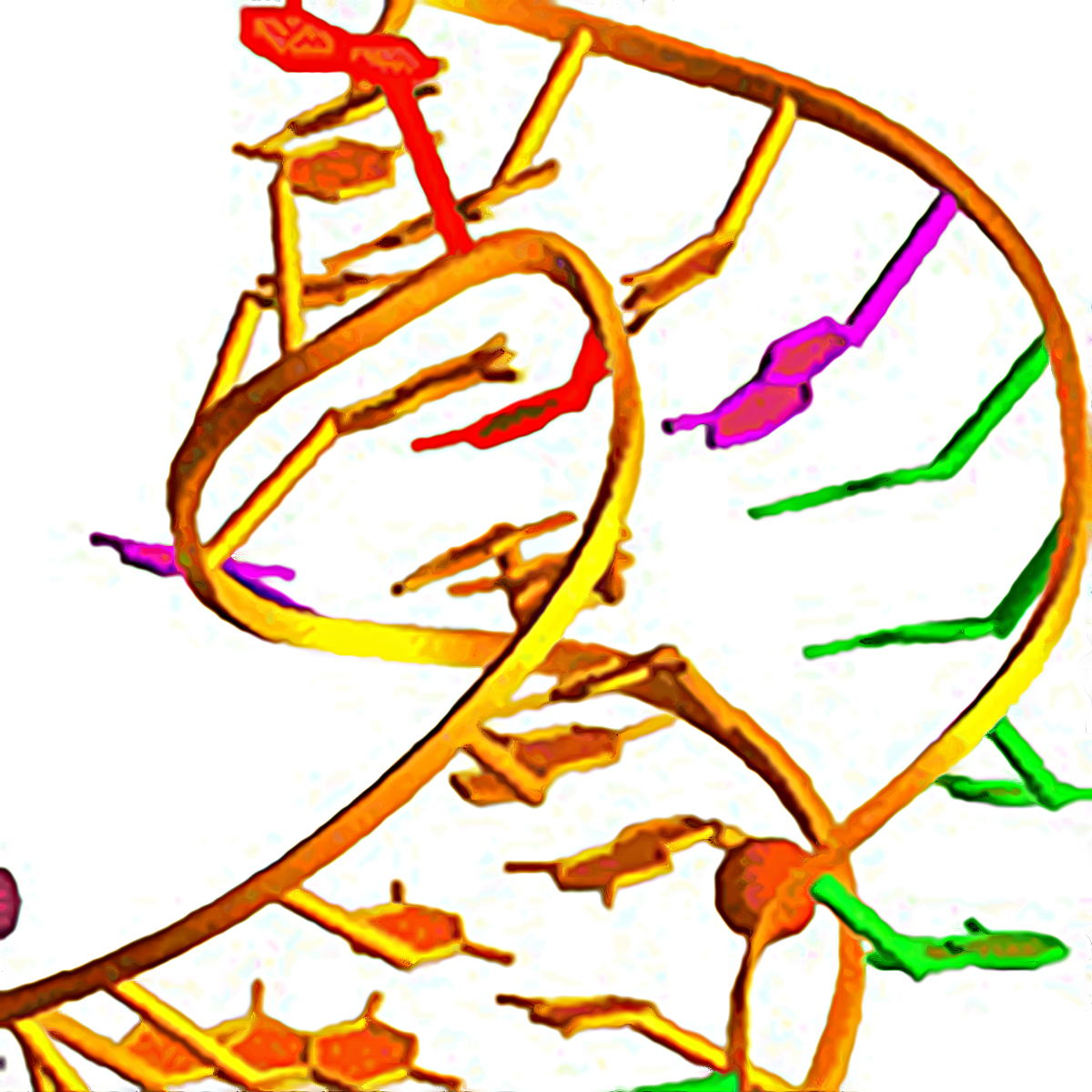 Ribosomal frameshifting in RNA Viruses